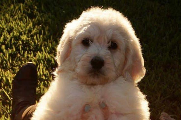 ABCs Puppy Zs