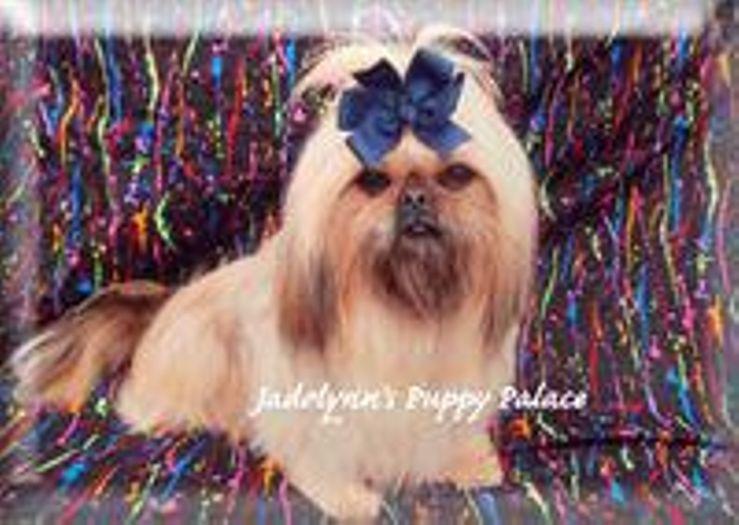 Jadelynn's Puppy Palace