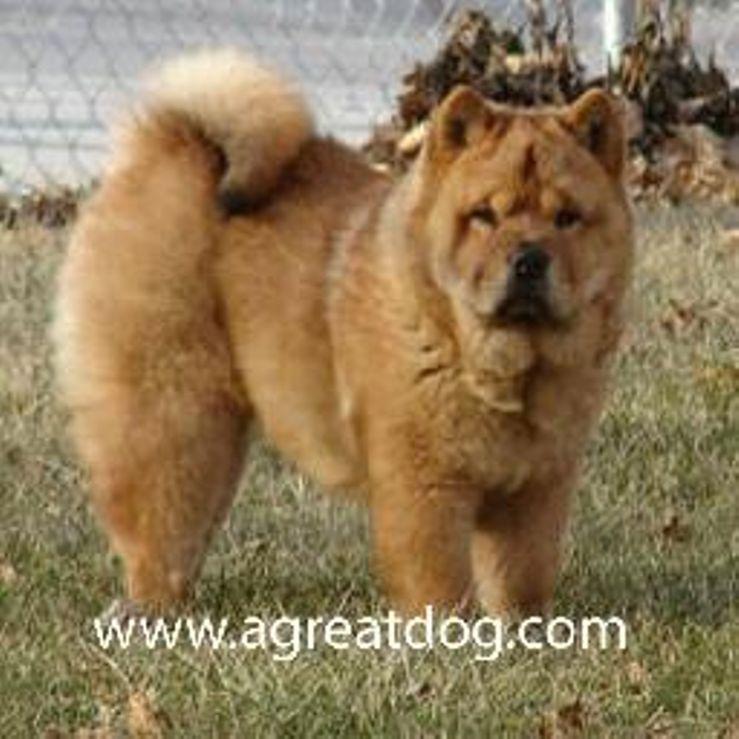 Agreatdog