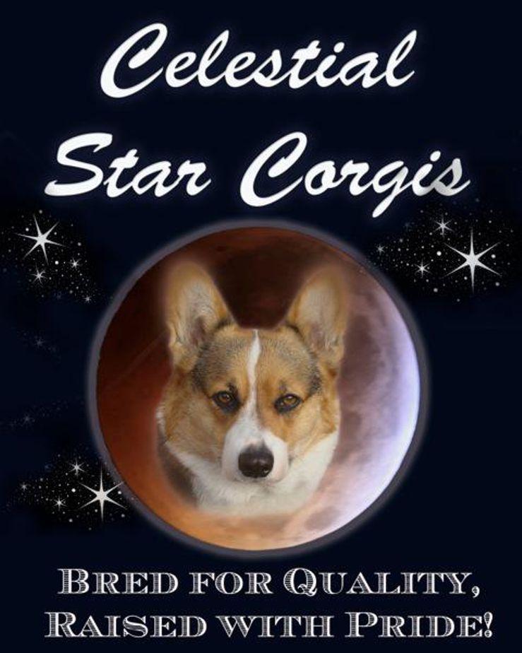 Celestial Star Kennel