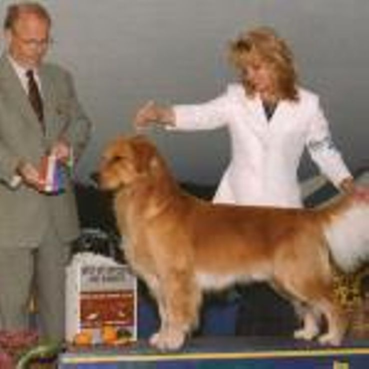 Shadalane Golden Retrievers
