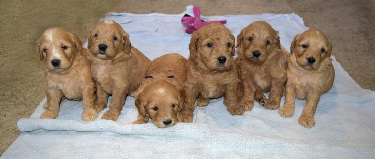 Hilltop Pups