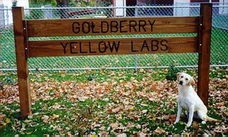 Goldberry Yellow Labrador Retrievers