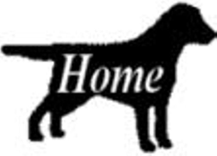 Laurel Fork Labradors