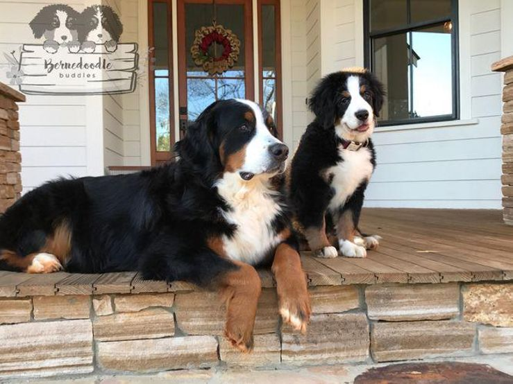 Dog Breeders Near Wilmingtonnc With Puppies For Sale