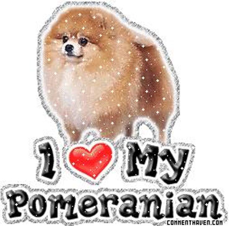 Precious Poms N Persians