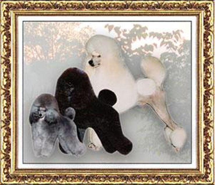 Ash's-Mystical 'AKC Breeder of Merit' Miniature/Toy Poodles