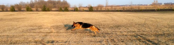 Elhart K-9's German Shepherd Dogs