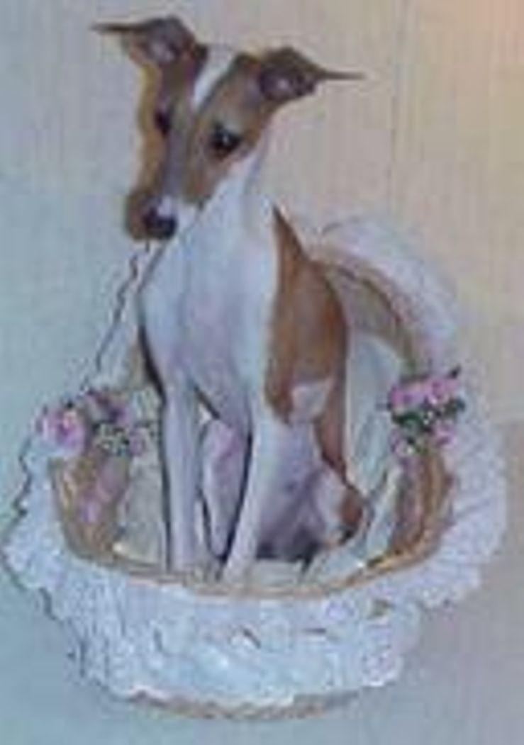 Layne's Italian Greyhound