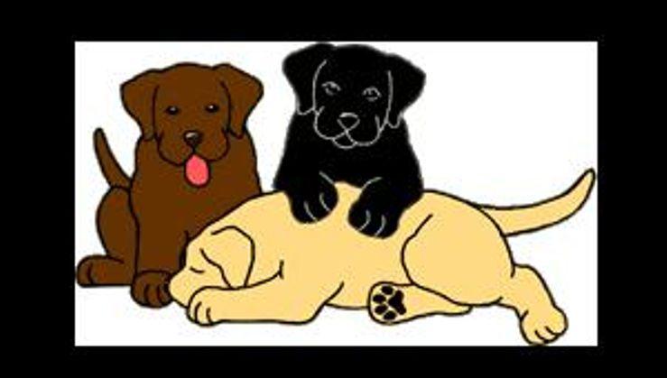 Elkens Labrador, reg.  Labrador Retrievers